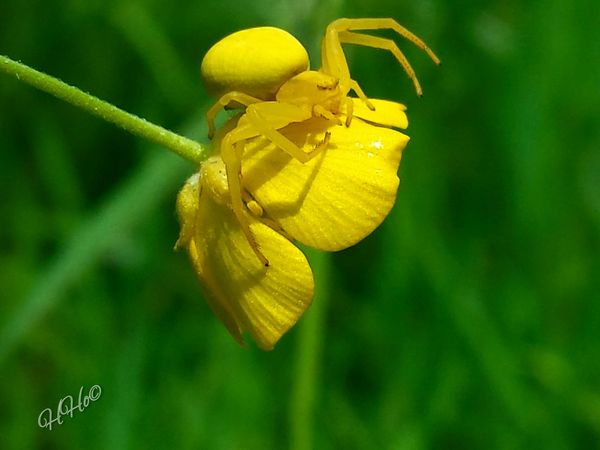 Spider Spinne Macro Macrophotography Naturephotography Nature Photography Landscape #Nature #photography Nature Flower Yellow Spider Yellow Yellow Flower