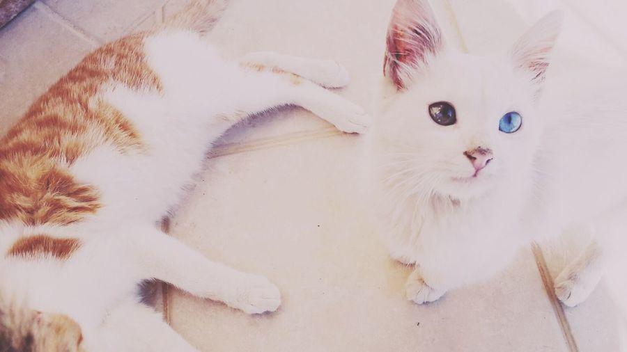Cat Lovers Cat♡
