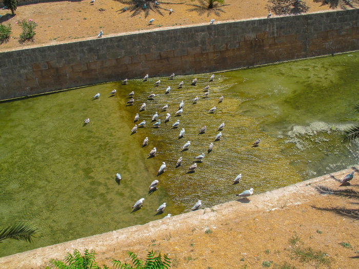 High angle view of birds on land