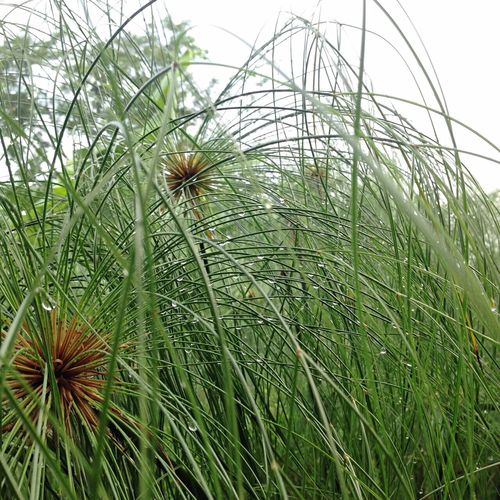 Grass And Water Grass Grass Area Grassy Growth Nature No People Green Color Outdoors Beauty In Nature Plant Grass Day Close-up Drop Drops Of Water Droplets, Water Droplets, Flowers  Drops Of Rain Drops_perfection Drop Of Water Drop Collection
