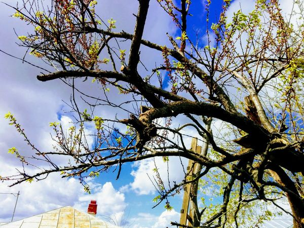 Branches And Sky Spring Ladder Veronica IONITA Photography WOLFZUACHiV Photography Tree Flower Branch Sky