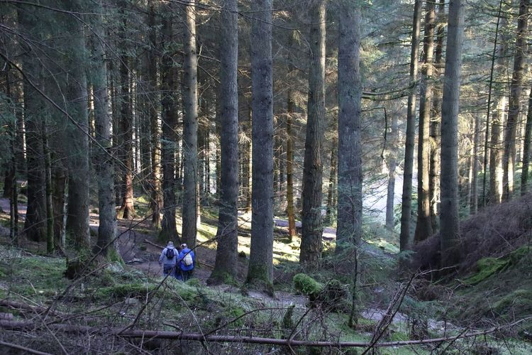 Cumbria Hiking Lake District Sunlight Beauty In Nature Branch Day Forest Forest Photography Growth Hikers Nature Outdoors Tranquil Scene Tree Tree Trunk Walkers Walking Winlatter