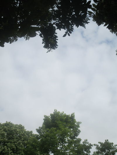 Beautiful Sky Beauty In Nature Branch Calm Sky Calmness Cloud - Sky Dark Green Day Deep Silence Forest Frame For The Sky Growth Low Angle View Nature No People Outdoors Scenics Serene Beauty Serenity Serenity... Sky Skyscape Tranquility Tranquility Tree