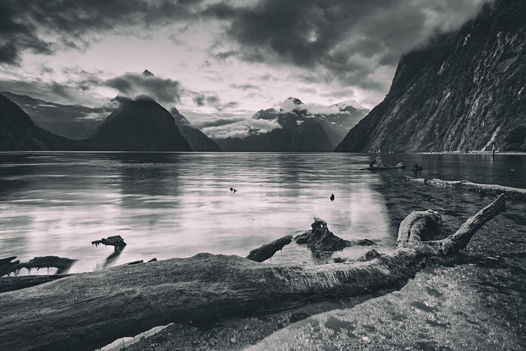 Gloomy day at Milford Sound. I'd waited for a glorious sunset, only to be greeted with a gloomy and cloudy moment. And it was a rainy sunrise the next day. Beauty In Nature Bird Black And White Cloud Cloud - Sky Cloudy Day Idyllic Lake Milford Sound Mountain Mountain Range Nature New Zealand No People Non-urban Scene Outdoors Scenics Sky The Great Outdoors With Adobe Tranquil Scene Tranquility Water Water Bird Weather