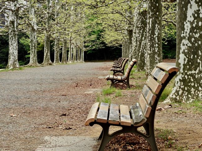 Seat Plant Tree Nature No People Day Absence Park Bench Outdoors