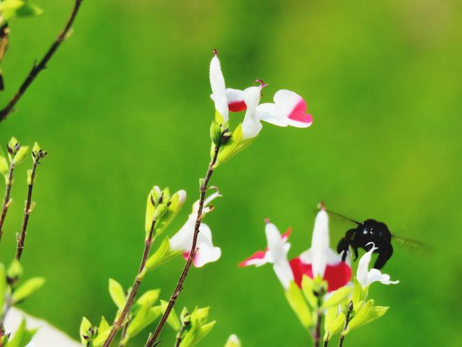 Nectar EyeEm Selects Flower Leaf Flower Head Insect Animal Themes Close-up Plant