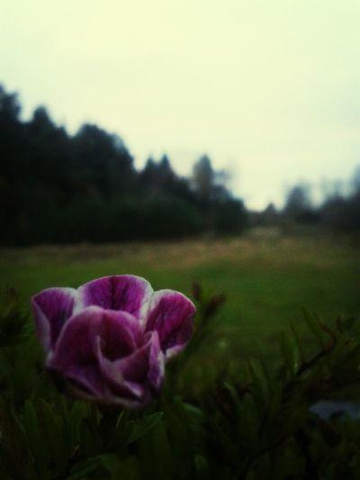 Hello World The World Around Me Flower Forest
