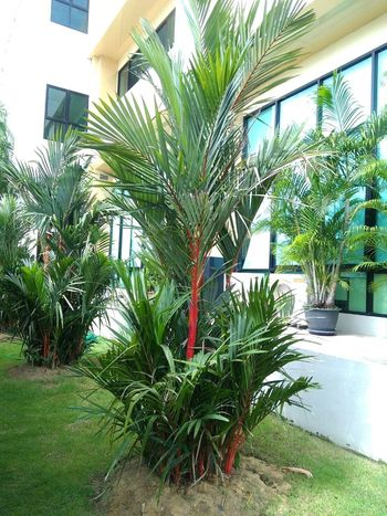 Outdoors Growth No People Cloud - Sky Nature Sky Tree Close-up Green Color Plant Plams🌴 Plamtrees Plamodel Plam Trees Plam Trees PLAMO Plam Tree Plams Red Plam Day