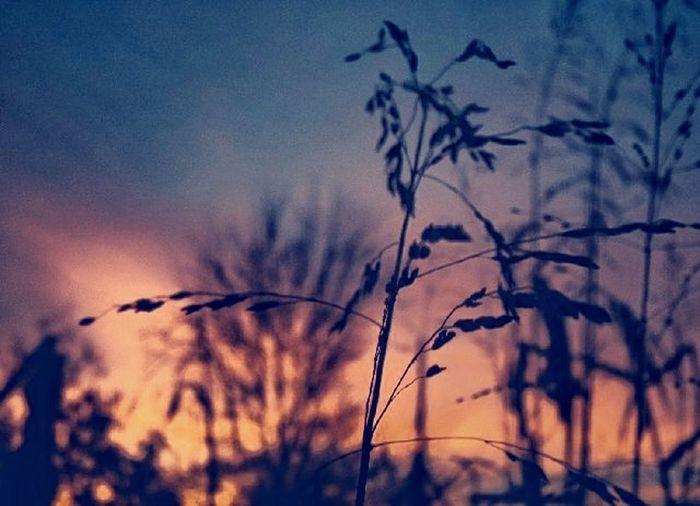 Sun rising in