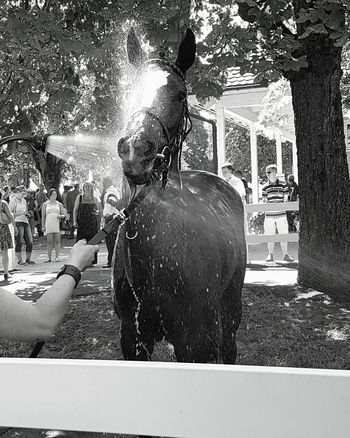 | when the attention is somewhere else | Baden racing, Galopprennbahn Iffezheim Attention Spraying Water Splashing Hot Weather Horses Hot Day Pictureoftheday Photography-world Photography Hanging Out EyeEm Best Shots Eyemphotography With Smartphone Picoftheday Tradition Race Summer Sommer Racetrack Horse Racing Horseracing Pferderennen Pferderennbahn Iffezheim Turf Sports Baden Baden Germany