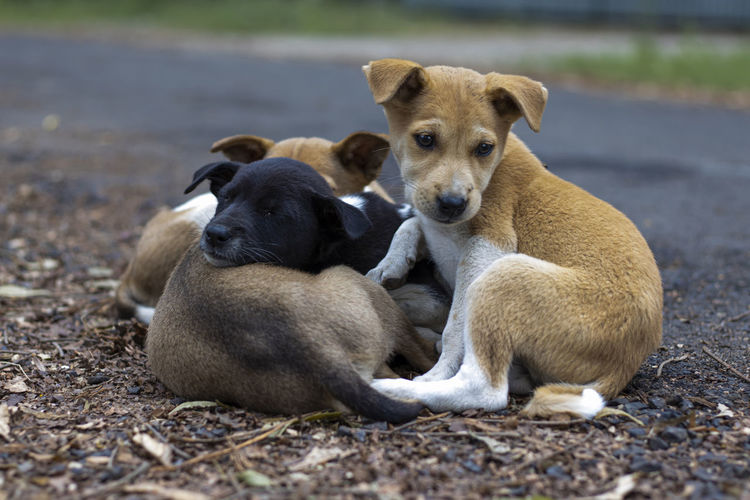 Portrait of dogs sitting outdoors