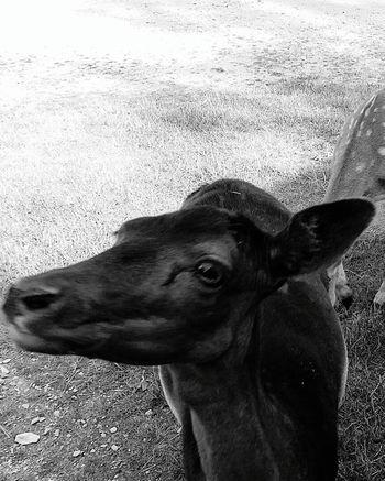 Animal Photography Animals In The Wild Animal Portrait Fotofantast Bilderbuch Animal Representation Animal Lover Photography EeyemBestPhotography PicturePerfect Animal_collection Animal Wildlife Animals Posing Animalphotography