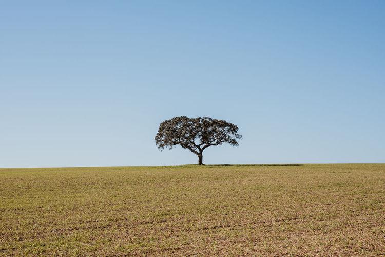 Single tree on field against clear sky