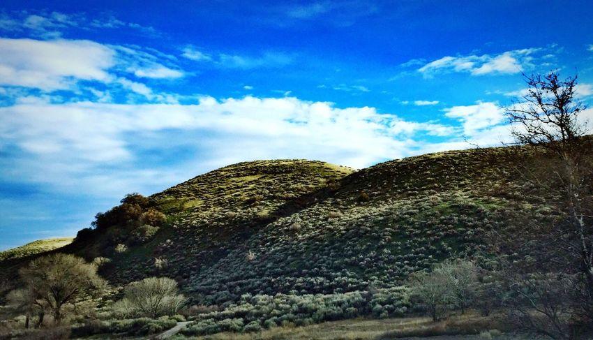 Mountain Sage Nature Landscape