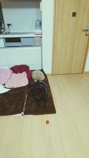 Door Day Hello World とっちゃん Dog Pets 縦列睡眠。犬と猫。