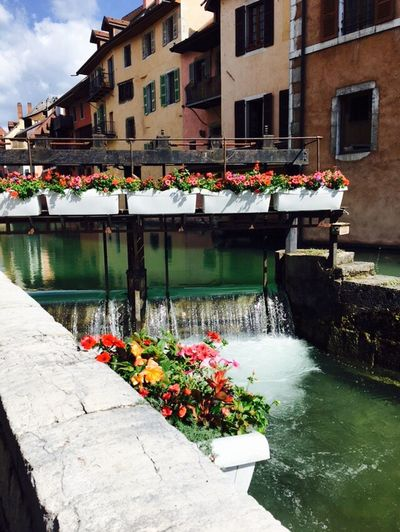 Flowers floating on water in city