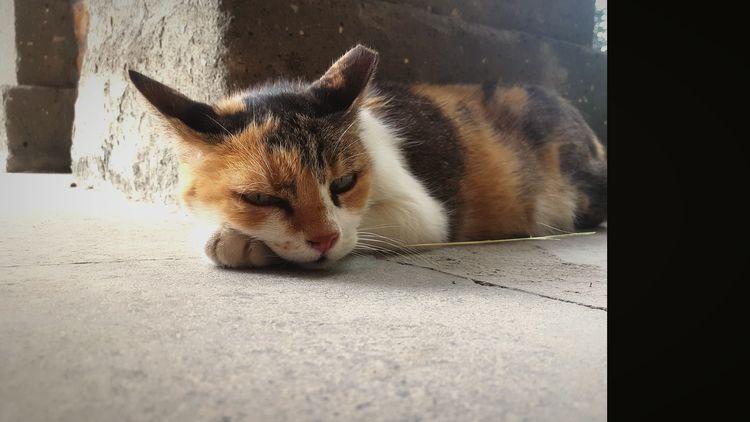 Animal Feline Outdoors Cats Cat Lovers Cats Of EyeEm Cats Around The World Ferral Cats Dozing