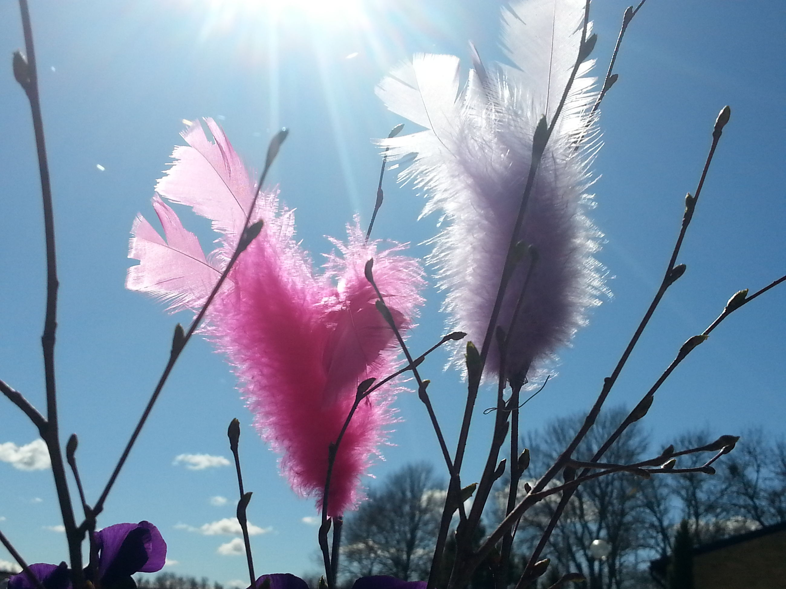 flower, fragility, freshness, growth, beauty in nature, pink color, petal, nature, close-up, plant, flower head, stem, blooming, in bloom, focus on foreground, season, blossom, sunlight, springtime, botany