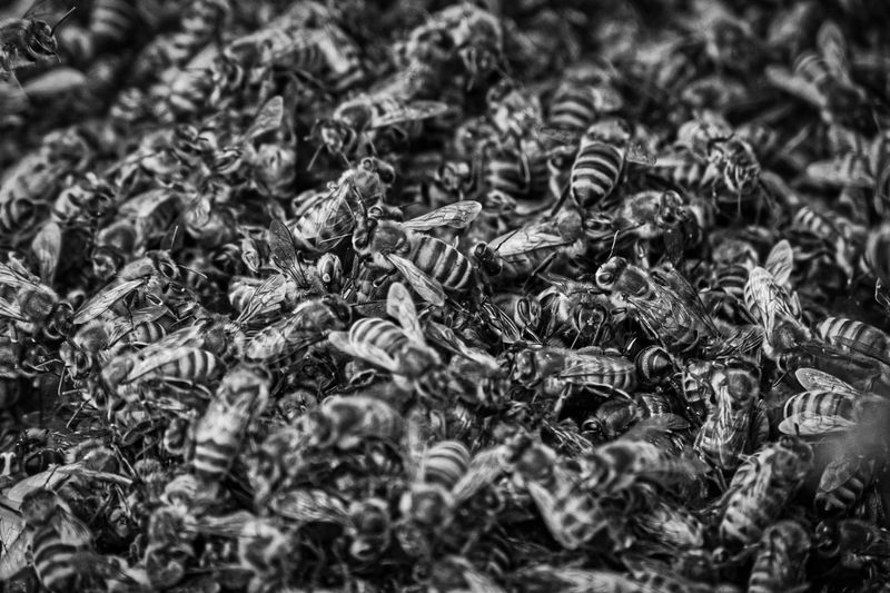 Bee Hive No