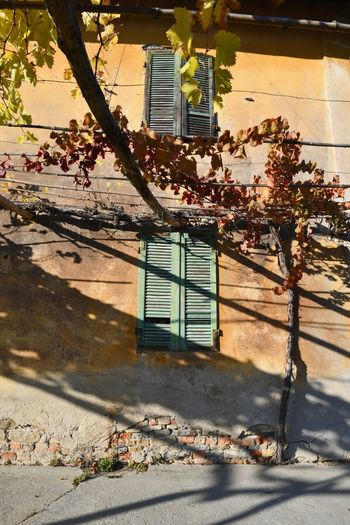 Langhe Autumn Wall Pergola Light And Shadows Windows Old Fashioned Building Yellow Color Sunny Architecture Built Structure Building Exterior Outdoors Day No People Shadow