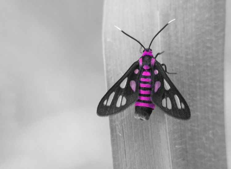 wasp moth Macrophotography Macrophone Macro_shot Macro_globe Insect Insects  Nature Hanging Day