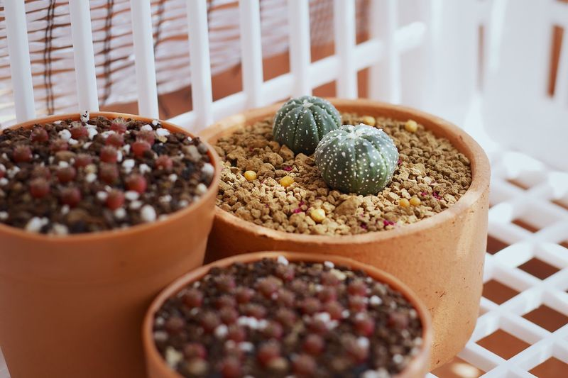 Close-up of cactus on table