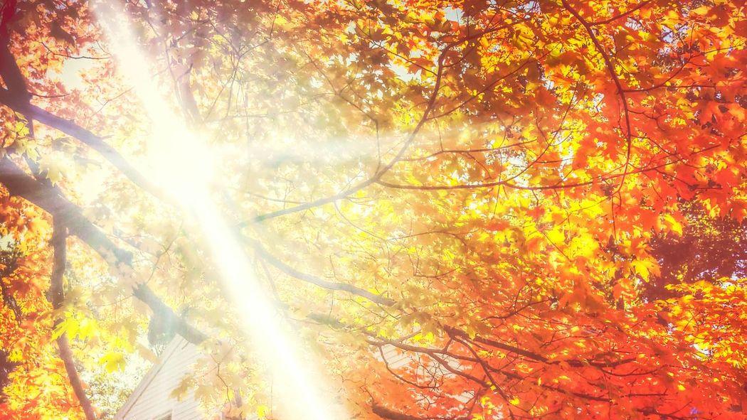 Fall Sun Sunlight Light Bright Shine Leaves Tree Komorebi Nature Beautiful