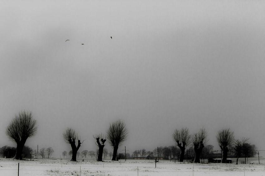 Winter Skåne Sweden Trees Sky Landscape Gloomy winter day in the south of Sweden.