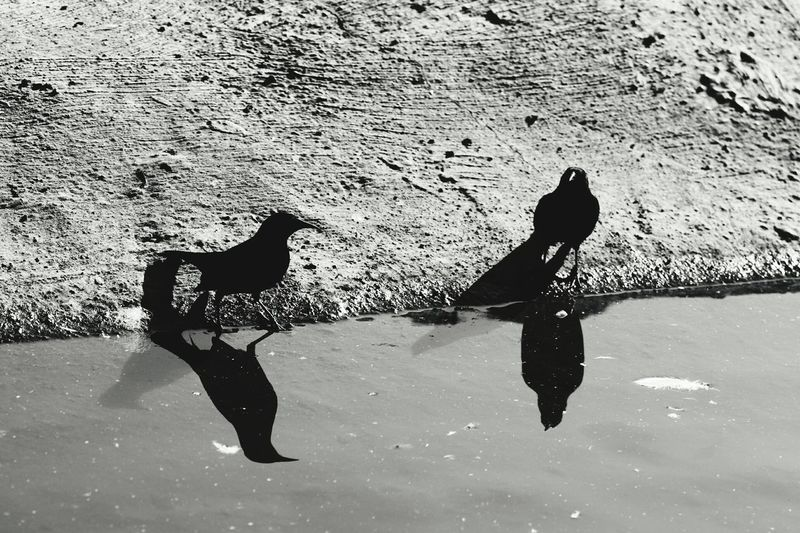 Canon 70d Nature_collection Moment Lens My Unique Style EyeEm The Best Shots Bird Black & White Monochrome FromChile
