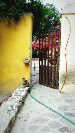 No People Outdoors Day Building Exterior Architecture Built Structure San Luis Potosí Cats Door