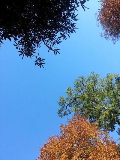 MobilephotographyTrees WeekendWeekend Taking Photos Madrid Spain Multicolor Trees