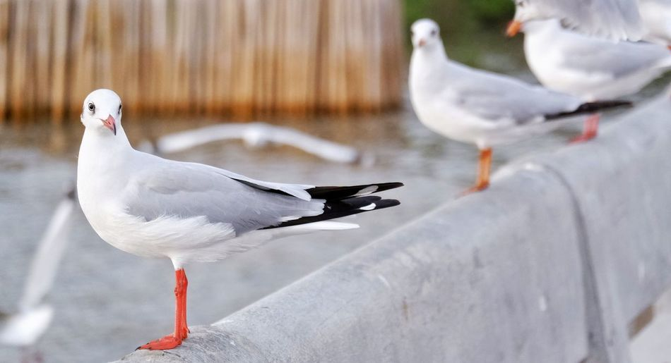 Close-up of seagull perching on a lake