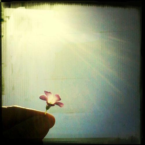 - E Mais um dia que Deus abencoou o ceu azul, e as flores brotar..''