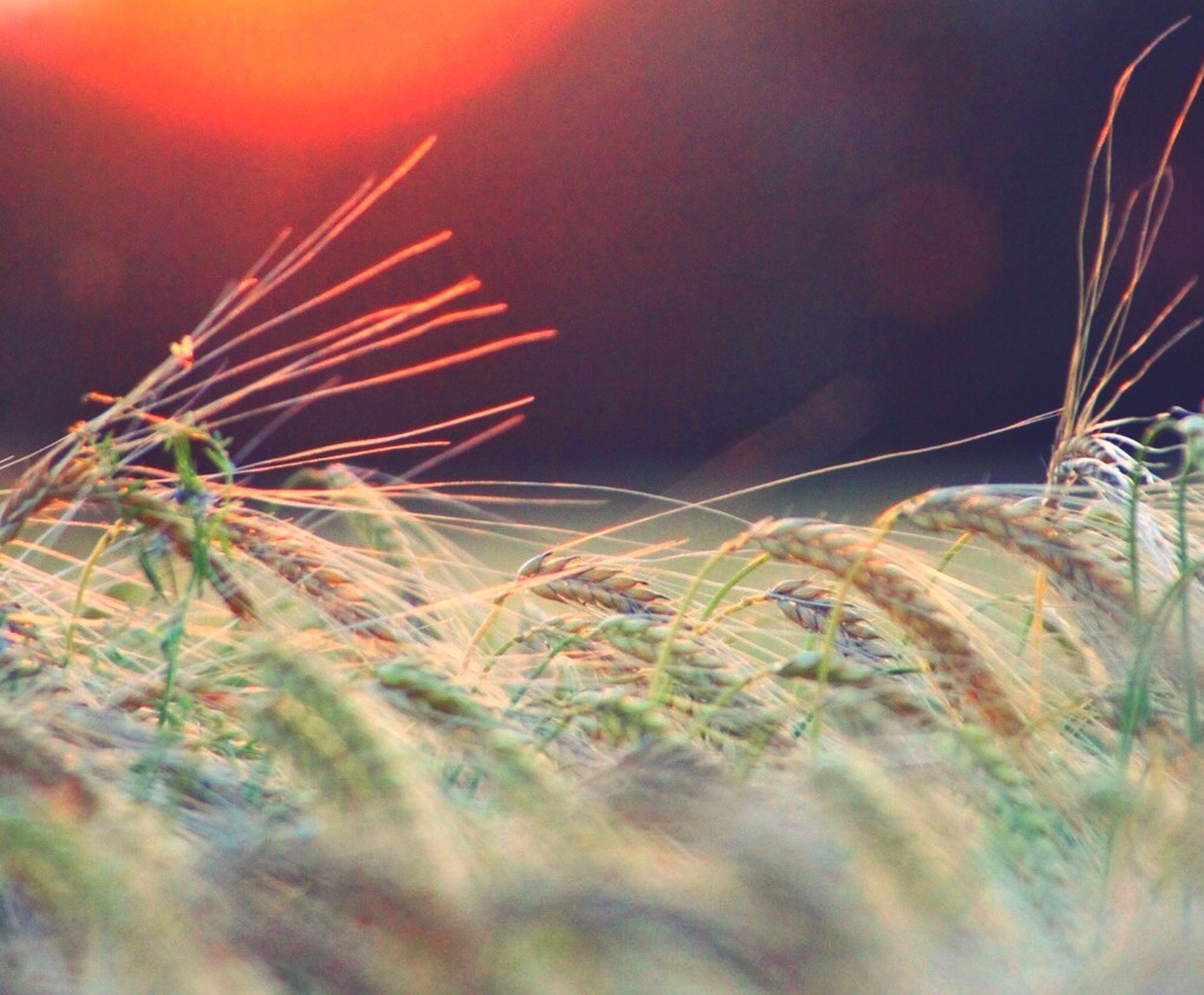 sky, growth, nature, grass, plant, low angle view, beauty in nature, tranquility, field, outdoors, no people, tranquil scene, close-up, focus on foreground, scenics, selective focus, idyllic, day, dusk, landscape