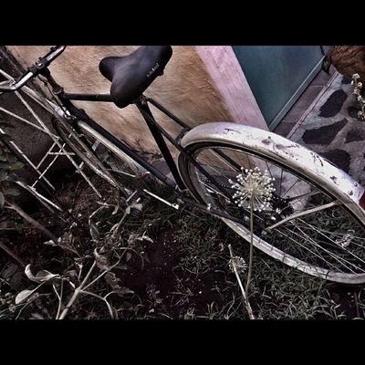 Bici Bicicleta Bicycle Bike Rastasmgph