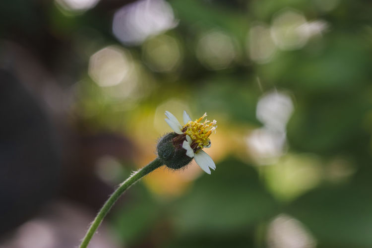 Flower Flowering Plant Plant Growth Fragility Freshness Vulnerability  Beauty In Nature Close-up Focus On Foreground Nature Petal Day No People Flower Head Selective Focus Inflorescence Outdoors Pollen Pollination