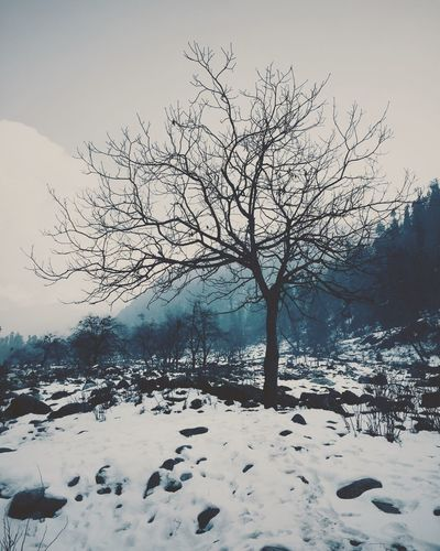 Jammu And Kashmir JammuandKashmir India Travel Photography Showcase: February Snow Snow ❄ Tree IPhone IPhoneography Landscapes With WhiteWall