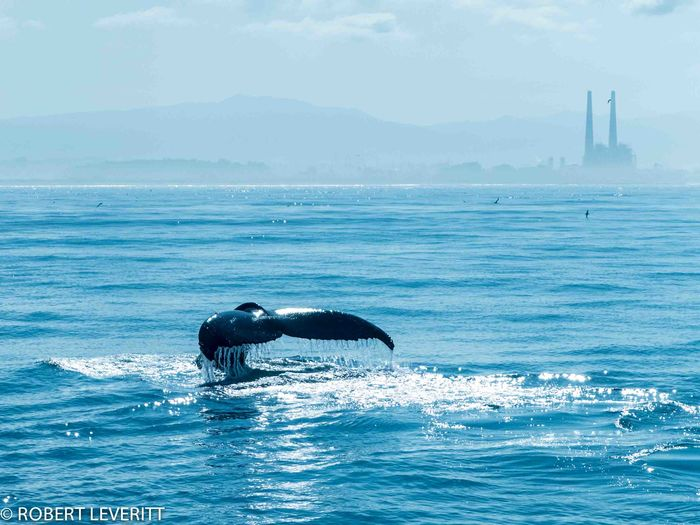 Bigblue Blue California Coast Fluke  Humpback Monterey Bay Ocean Sea Whale Whalefluke