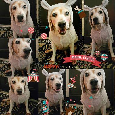 其實跟孩子般得拍超多照片才能拍到最好的表情啊 Mymilinbaby Beagle