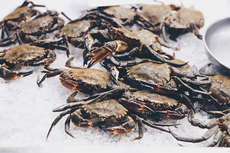 High angle view of crabs on ice for retail display at fish market