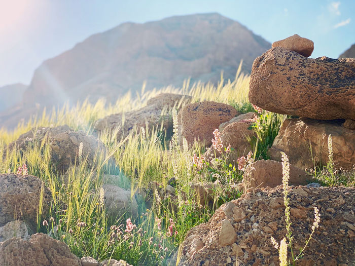 Plants growing on rock against sky
