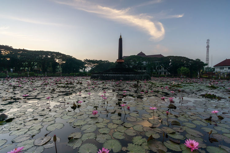 View of water lily in lake