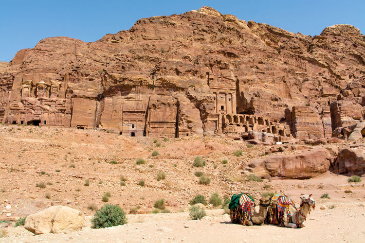 Ancient City Travel Photography Petra, Jordan Archeological Beautiful Place Camels Hills Carved Stones Nabatean Calmness
