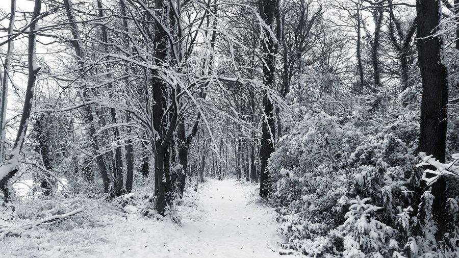 Tree Snow WoodLand Woods Walks Walking Outdoors Cold