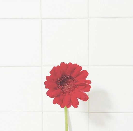 Keeping it simple. Flower Freshness Fragility Red Flower Head Petal No People Red Color