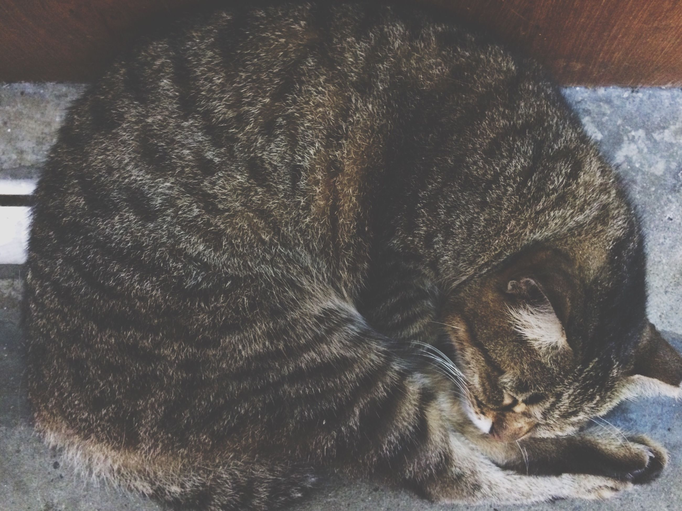 animal themes, one animal, close-up, animals in the wild, mammal, wildlife, animal body part, indoors, domestic animals, high angle view, animal head, sleeping, relaxation, pets, resting, no people, zoology, day, dead animal, lying down