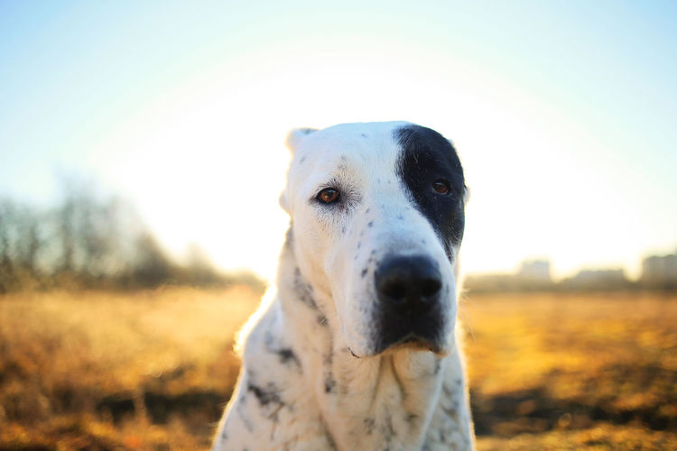 Close-up portrait of a dog on field