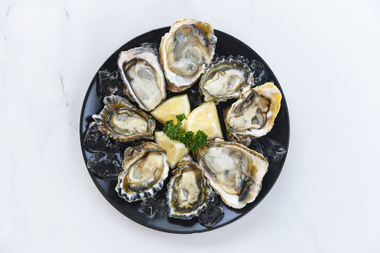 High angle view of oysters in plate against white background