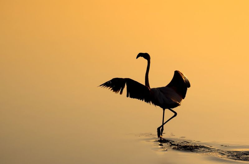 Bird Sunset Sky Animal Animal Themes Vertebrate Water Silhouette Animals In The Wild Animal Wildlife Copy Space Nature No People Clear Sky One Animal Orange Color Outdoors Beauty In Nature Sea