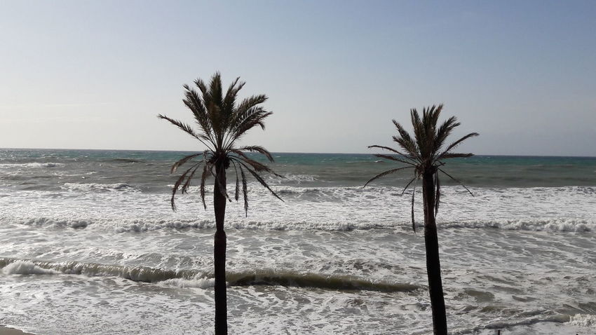 Beach Palm Tree Sand Sea Tree Water Tranquility Scenics Landscape Sky No People Nature Outdoors Horizon Over Water Beauty In Nature Day Benalmádena, Malaga, Spain Nature